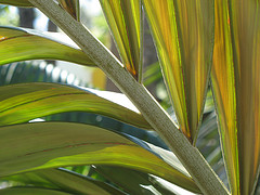 Palm branch